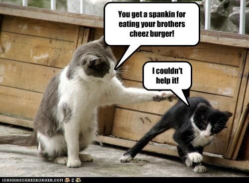 Cheezburger Image 6844749568