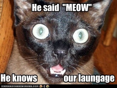 talk captions language meow speak Cats bilingual - 6845025024