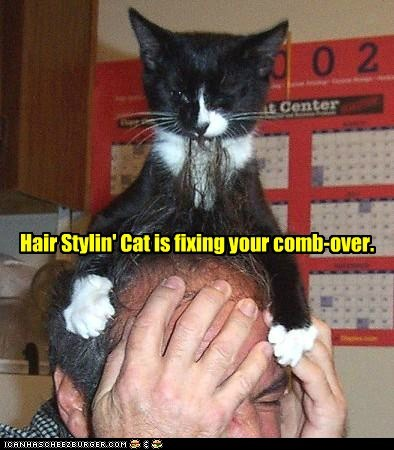hair,toupee,captions,hairline,chew,Cats,comb over
