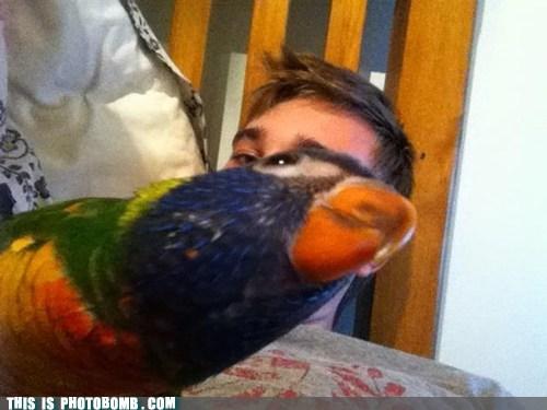 birds animals - 6845666048