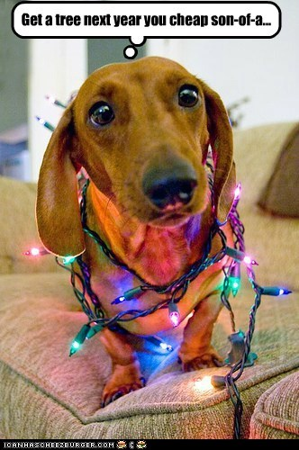 dogs,dachshund,christmas tree,christmas lights,cheap,holidays