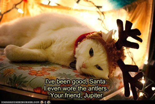 Jupiter's Haiku Letter to Santa I've been good, Santa. I even wore the antlers. Your friend, Jupiter