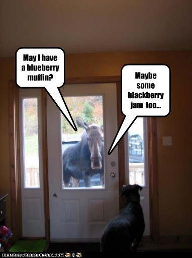 May I have a blueberry muffin? Maybe some blackberry jam too...