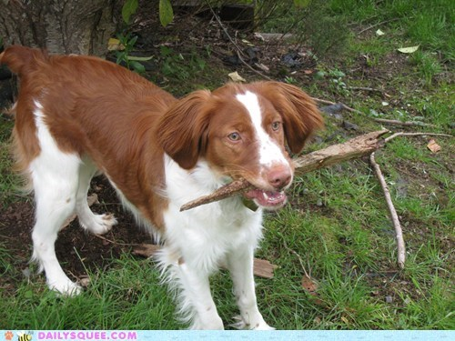 fetch stick dogs reader squee Vampire Slayer squee - 6846857728