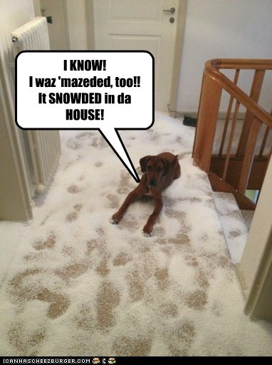 I KNOW!  I waz 'mazeded, too!!  It SNOWDED in da HOUSE!