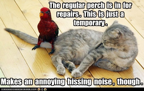 perch repairs parrots birds tail sitting Cats hissing - 6847167744
