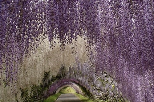 flowers Japan landscape pretty colors g rated destination win Hall of Fame best of week