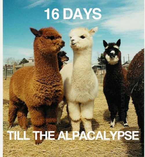 countdown mayan calendar alpacalypse captions puns apocalypse end of the world alpacas