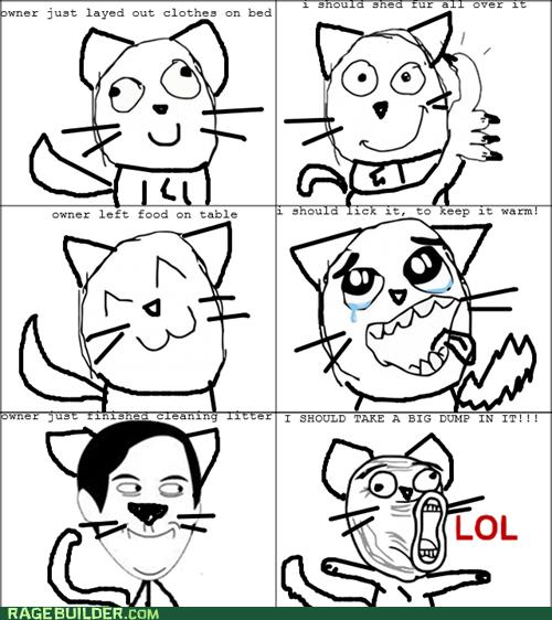 shedding poop pets cat logic lol litter box food