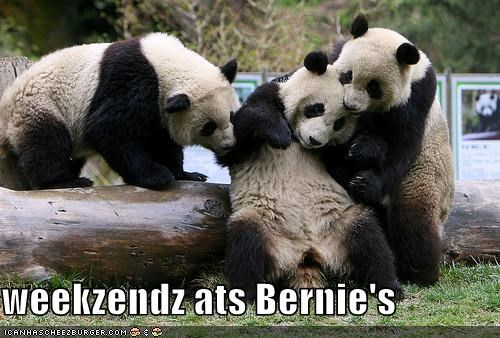 bernie,lolpandas,panda,Party