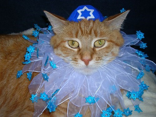 cyoot kitteh of teh day christmas hannukah jewish Cats - 6848007424