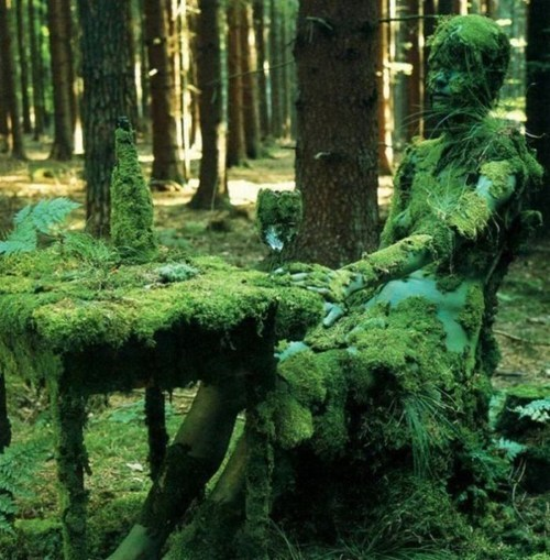 nature,mossy