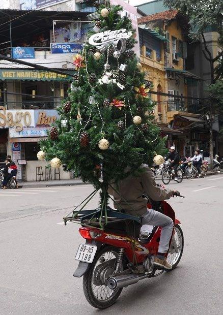 christmas wtf tree funny holidays - 6848160000
