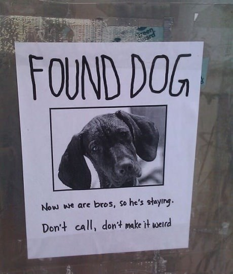 sign lost and found dogs lost