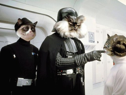 star wars,colonel meow,photoshop,Memes,Grumpy Cat,tard,Cats,lil' bub