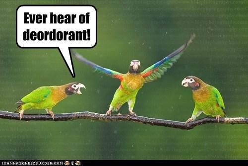parrots wings deodorant stinky armpits - 6848713984