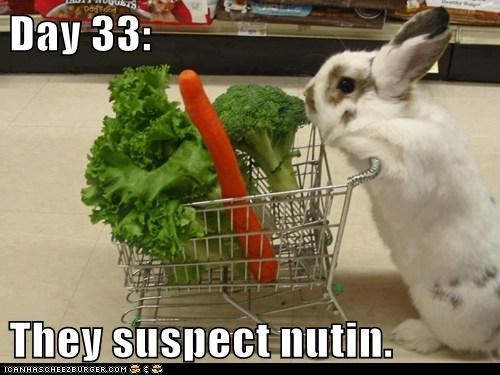 bunnies shopping day they suspect nothing rabbits grocery store - 6848789504