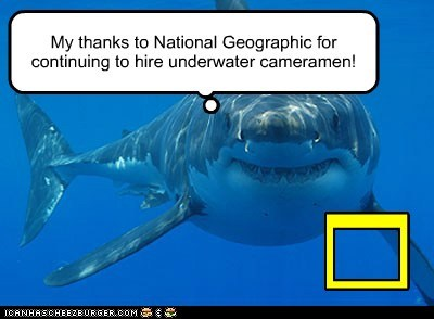 underwater,national geographic,thanks,sharks,eating,cameramen