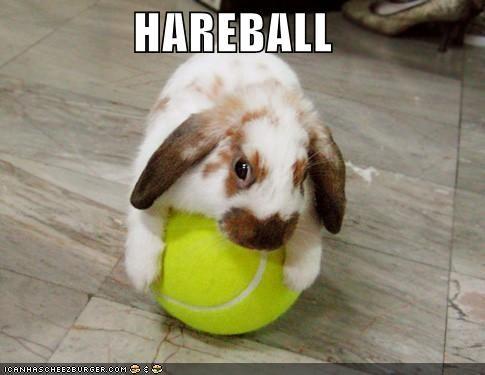 bunny cute hareball lolbunnehs - 684935424
