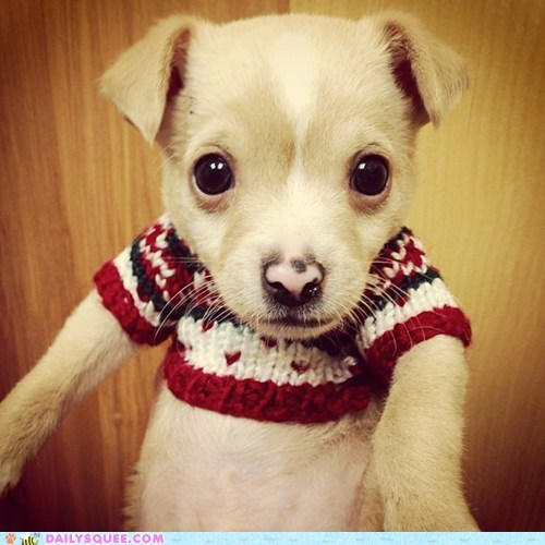 dogs,pets,reader squee,squee,sweater,delightful insurance