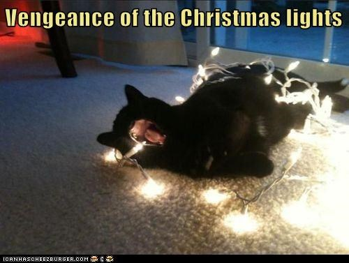 christmas lights 12 days of catmas captions Cats bulbs catmas - 6849879808