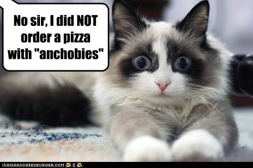 anchovies pizza captions oops Cats mistake delivery - 6850384896