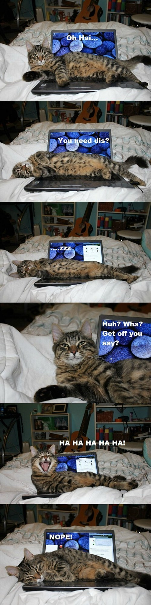 laptops computers annoying in the way captions no multipanel Cats rude - 6850799360