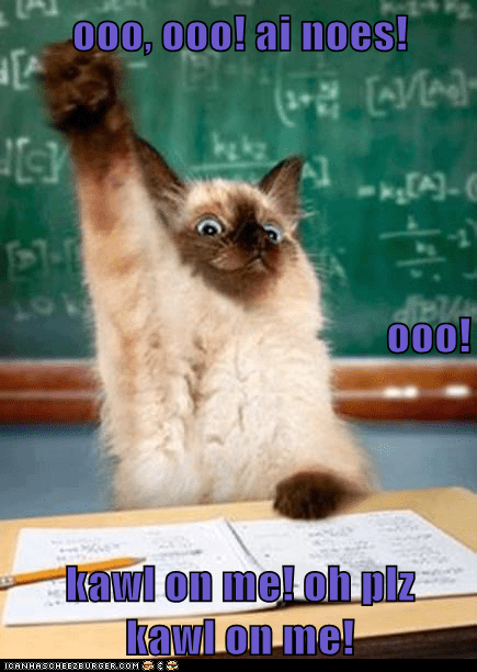 Lolcats - teacher - LOL at Funny Cat Memes - Funny cat pictures with words  on them - lol | cat memes | funny cats | funny cat pictures with words on