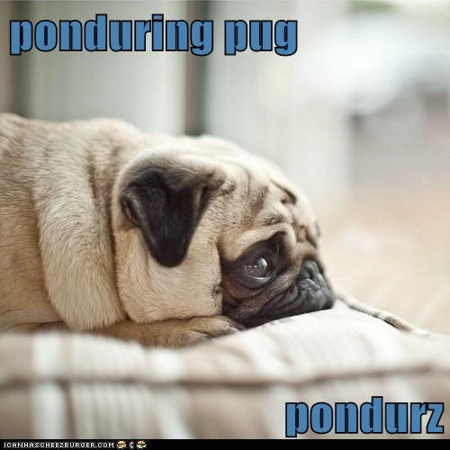 dogs pug pondering thinking sad dog