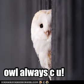 owl always c u!