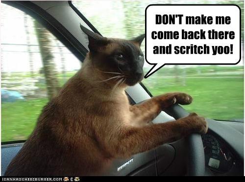 drive car captions parent Cats road trip - 6851096320