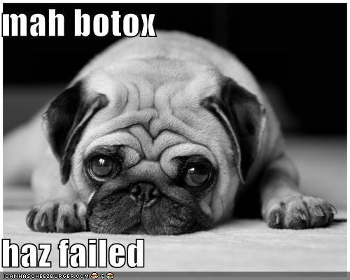 FAIL pug wrinkles - 685173504
