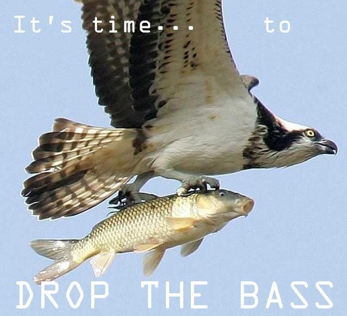 fishing,bird of prey,drop,literalism,bass,bird,fish,double meaning