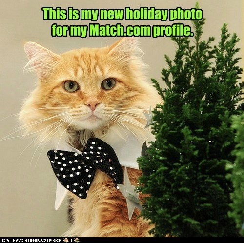 christmas romance captions holiday Cats Match.com