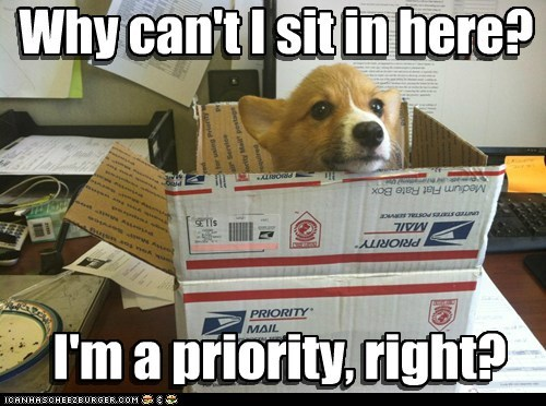 dogs puppies package if i fits i sits corgi mail priority - 6852931584