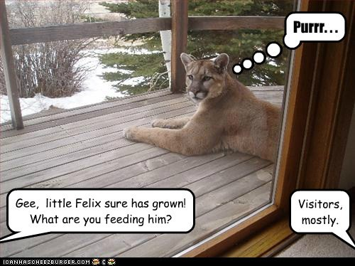 Gee,  little Felix sure has grown! What are you feeding him?