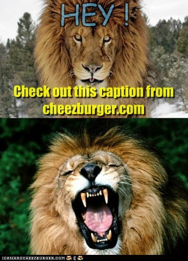 Cheezburger Image 6853306880