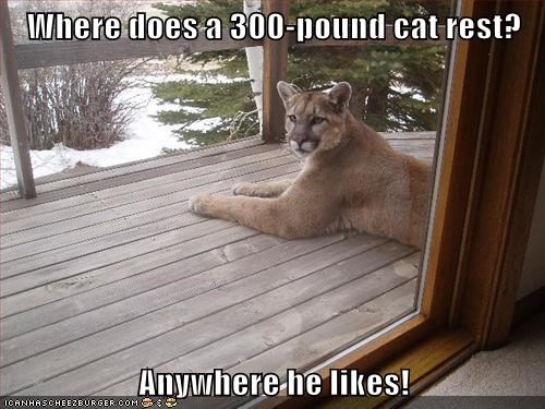 mountain lions,deck,house,cougars,rest,intimidating,Cats,anywhere