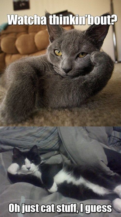 cat stuff,captions,thinking,i guess,multipanel,Cats,watcha thinking about