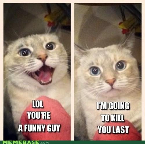 murder lolcats homicidal cat - 6854449152