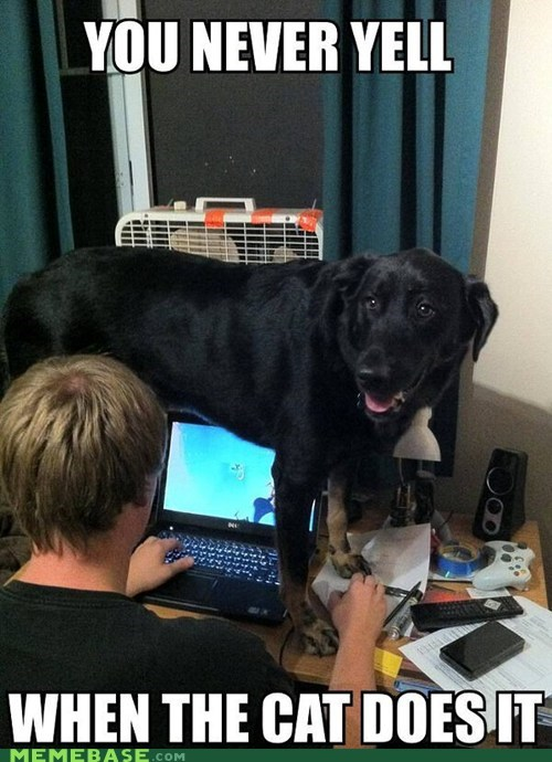 dogs,computers,pets,Cats