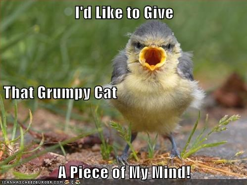 piece of your mind birds grumpy angry Grumpy Cat - 6854481408