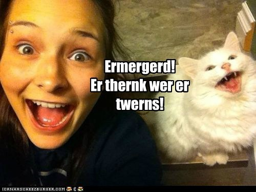 ermagerd,owner,captions,twins,Cats,omg