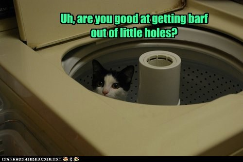 holes fun ride captions barf washing machine Cats