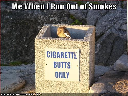 ran out smokes gophers addiction cigarette buts smoking desperate Prairie Dogs