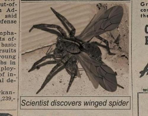 wings spider Damn Nature U Scary Kill It With Fire Hall of Fame best of week - 6854749952