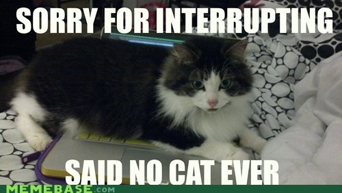captions computer sorry laptop Cats interrupt - 6854920448