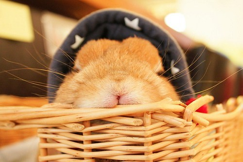 Bunday rabbit bunny squee hat basket