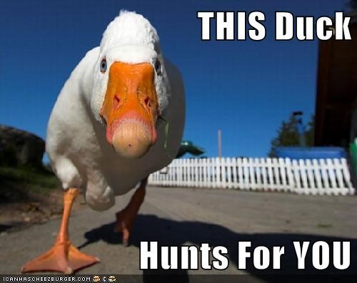scary you ducks duck hunt hunt - 6855135232