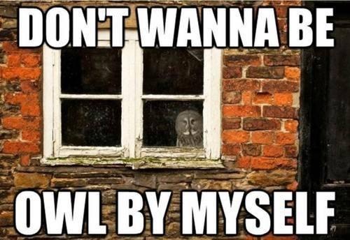 Sad lyrics song similar sounding Owl window all - 6855217152